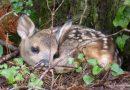 Naturschutz: Nachwuchs