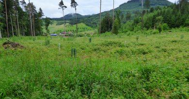 Staatswälder im Kanton Aargau