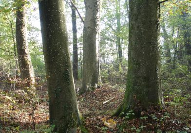 Naturschutz: Das Alter von Bäumen, der jugendliche Schweizer Forst und der Urwald