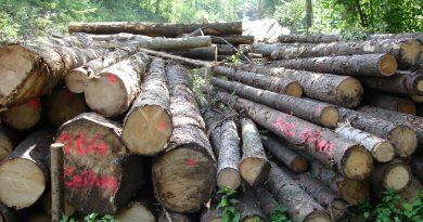 Die Holz-Lüge: Ein Wirtschaftsraum im Wandel
