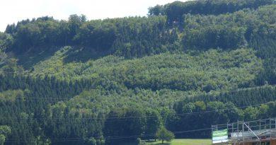 Kanton Aargau: Planlose Forstwirtschaft