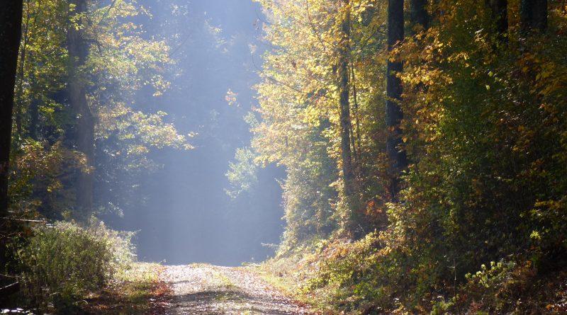 Herbstwald mit Forststrasse Eichwald, Zeiher Homberg