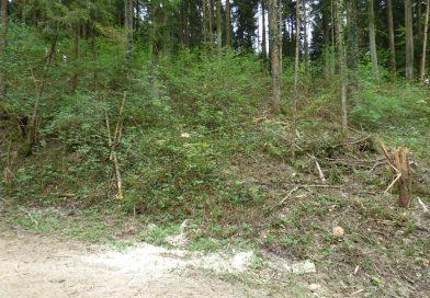Dreister Baumklau im Staatswald Densbüren