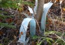 Verrottender Plastik versaut den Waldboden für Jahrhunderte