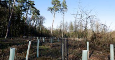 Das Ärgernis der Fricktaler Waldwirtschaft